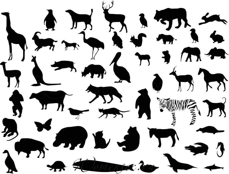 Картинки животных и птиц контурные карты
