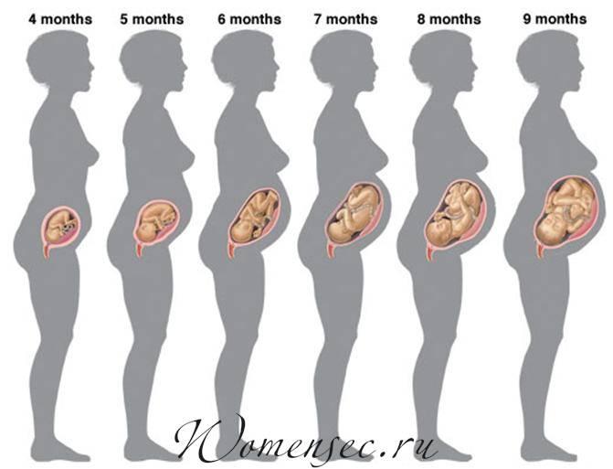 Как считать акушерские недели беременности